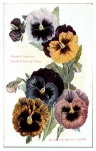 I.N. Kramer & Son, Cedar Rapids, IA Kramer's 20th Century Pansies Ad Postcard