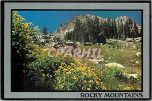 Modern Postcard Rocky Mountains Wildflowers in the Rocky Mountains Beautiful