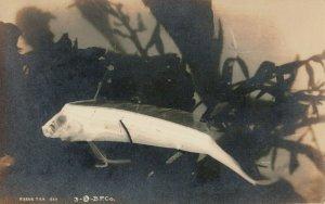 RP: AVALON , California , 1915 ; Ribbon Fish