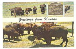 Old Fort Hays Buffalo Reservation, Hays, Kansas, PU-1976