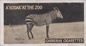 Carreras Cigarette Card Kodak At Zoo 1st Series No 36 Zebra