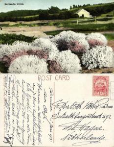 bermuda, Coral (1931) Stamp
