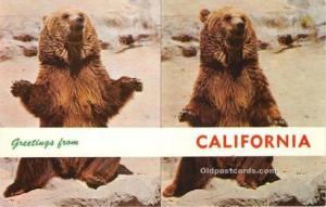 Bear Greetings from California, USA Unused