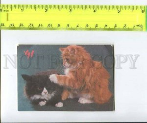 263905 USSR CAT charity Pocket CALENDAR 1991 year