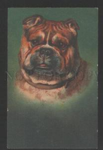 3119271 English BULLDOG Portrait Vintage Color RARE PC