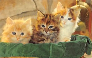 Meow Cat 1967