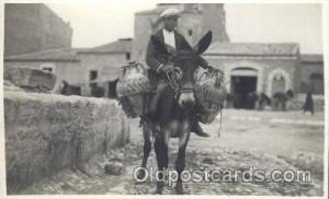 Mule Animal Postcard Post Card