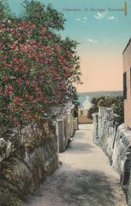 ST. GEORGES , Bermuda , 00-10s ; Oleanders