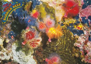 GREAT BARRIER REEF, North Queensland, Australia, 1950-70's; Spiral Gill Worms