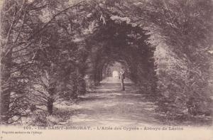 ILE SAINT HONORAT, France, 1900-1910's; L'Allee Des Cypres, Abbaye De Lerins