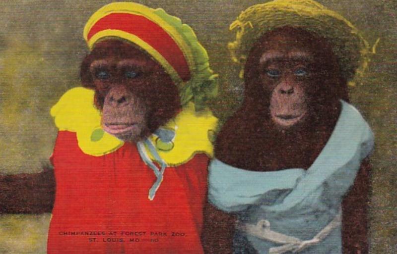 Missouri St Louis Chimpanzees Forest Park Zoo
