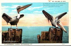 Florida St Petersburg Pelicans Mr and Mrs St Pete Curteich