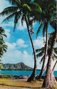 Hawaii Tree Climber On The Shores Of Waikiki 1971