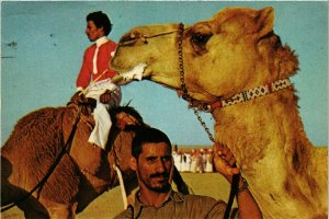 PC CPA SAUDI ARABIA, AFTER THE CAMEL RACE, Modern Postcard (B3794)