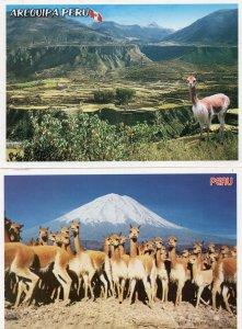 Arequipa Peru 2x Camel Postcard s