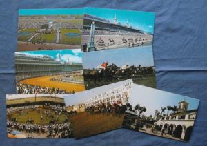 Horse Racing Postcards Del Mar Churchill Downs Thoroughbreds Lot of 7