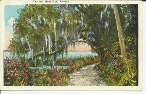 Florida, The Old Moss Oak