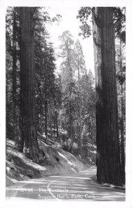 RPPC The Sentinels Sequoia National Park California Vintage Postcard ca 1950s