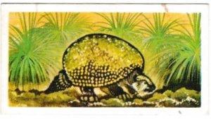Trade Cards Brooke Bond Tea Prehistoric Animals No. 47 Glyptodon