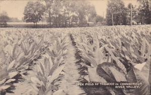 Open Field Of Tobacco In Connecticut River Valley 1955