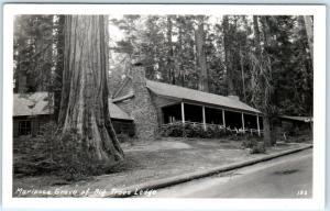 RPPC  YOSEMITE NATIONAL PARK, CA  Mariposa Grove BIG TREES LODGE 1958   Postcard