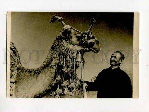 3076861 Camel champion Maymamak Breed dromedar  Vintage PC