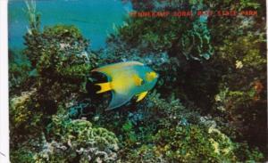 Florida Key Largo Pennekamp Coral Reef State Park In The Florida Keys 1969