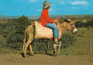 DOMINICAN REPUBLIC ,  1950-70s ; Donkey Rider , Cordillera Central, Los Montones