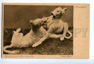 127199 Playing DOGS Puppies Mordskerle Vintage Kathe Hecht PC