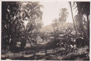 RP: Path through the jungle of Palm trees, Tahiti, 10-20s