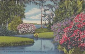 Florida Tropical Lagoon At Cypress Gardens 1950 Curteich
