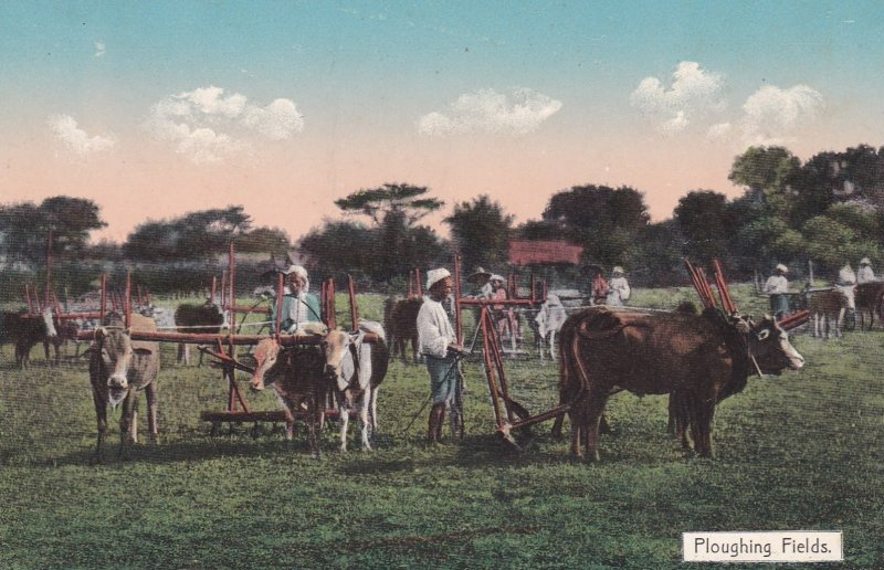 BURMA , 00-10s ; Ploughing Fields