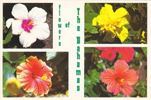 Flowers Of The Bahamas