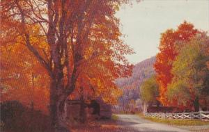 South Carolina Autumn Highway Scene