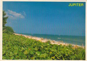 Beach Scene Jupiter Florida