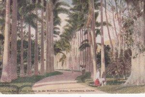 Peradeniya , Ceylon , 00-10s ; Royal Palm Avenue , Botanical Gardens