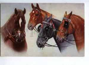 244476 Friends Charming HORSE w/ blinkers Vintage TSN #1914 PC