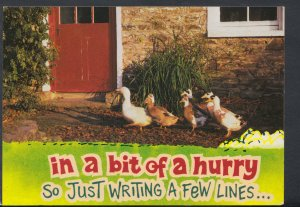 Animals Postcard- Ducks - In a Bit of a Hurry So Just Writing a Few Lines RR5167