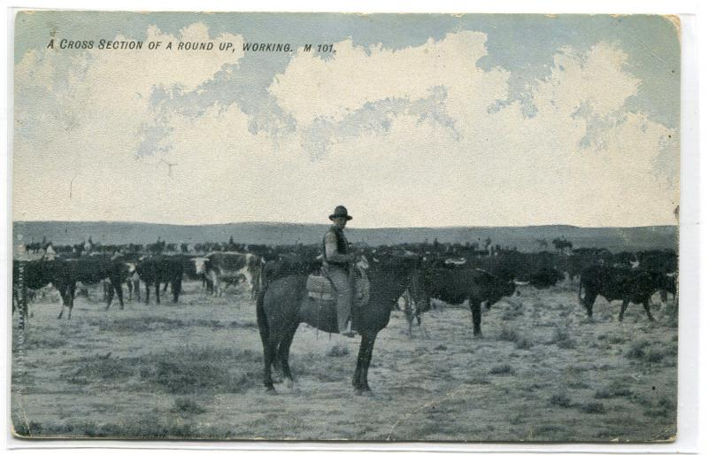 Cowboy Western Round Up of Cattle Ranching 1907 postcard