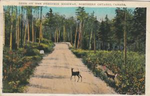 Northern ONTARIO, 10-30s; Deer on the Ferguson Highway