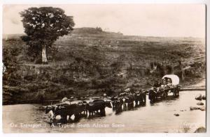 RPPC, Ox Transport, Typical South African Scene