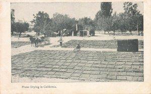 Prune Drying in California, early postcard, unused