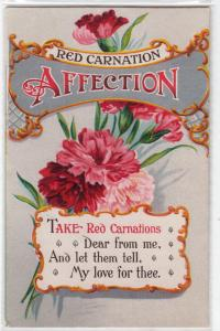 Red Carnation - Affection