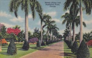 Florida Stately Palms And Australian Pines