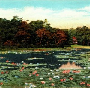 Dupont Lake, Rehoboth Beach, Delaware, Lilies, Lily Pads, Kaufmann Postcard