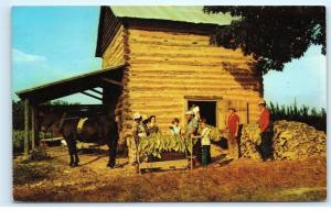 *Farmers Stringing Tobacco Leaves Farm Harvest Time Barn Horse Old Postcard B93