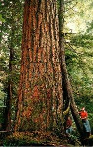 Western Washington Giant Douglas Fir Tree