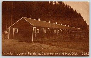 Petaluma California~Bianchi Poultry Co~Long Brooder House~Farmer~1908 Sepia