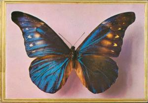 butterfly papillon Schmetterling farfalla