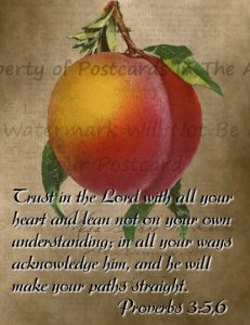 Single Handmade Postcard, Proverbs 3:5,6 Trust in the Lord with all your heart..